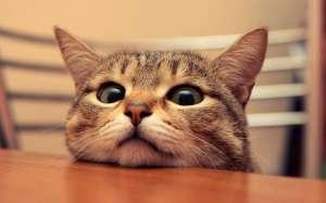 猫咪外出走失 宠主如何防范?